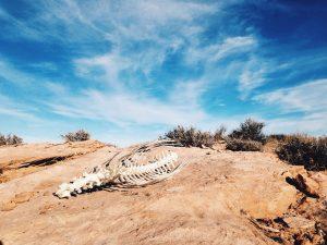 desert-1246842_1280